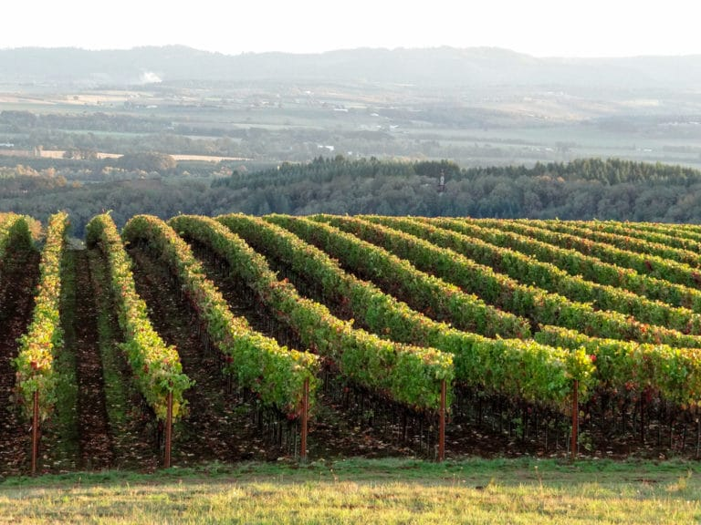 Stunning views like this are one of the many things to do in McMinnville