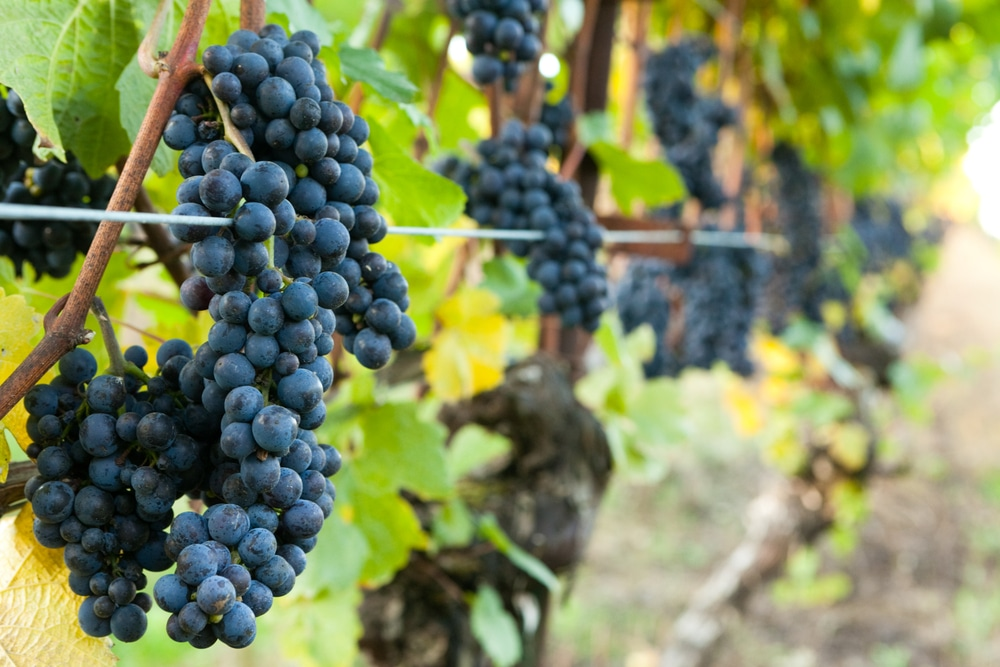 Wine Tasting at the top Oregon Wineries in the Willamette Valley