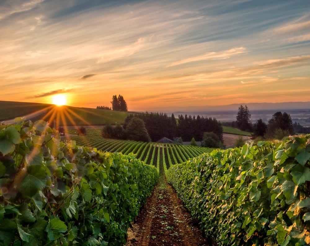 Sunrise at the stunning Oregon Wineries in the Willamette Valley